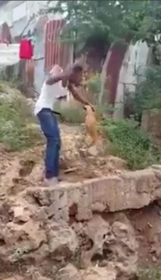 残暴!南非一男子用棍棒残忍虐狗惹众怒