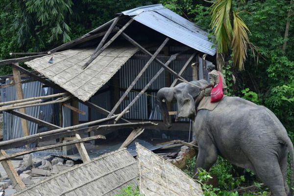 印度野生动物避难所拆除违规建筑 大象当起拆迁工人