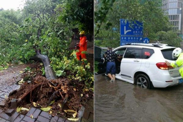 """台风""""帕卡""""登陆现场:大树被连根拔起"""