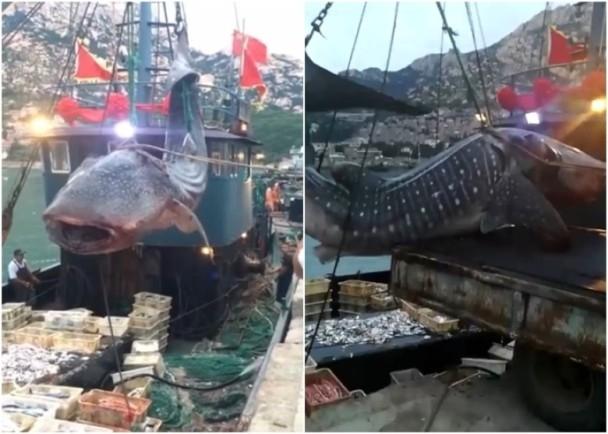 补渔网步骤图解