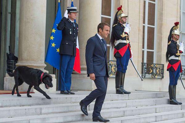 """马克龙同刚领养的""""法国第一狗""""亮相"""