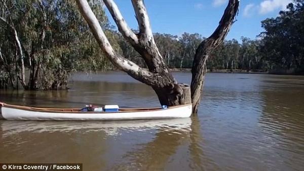 暖心!澳学生用独木舟救下河水暴涨区被困考拉