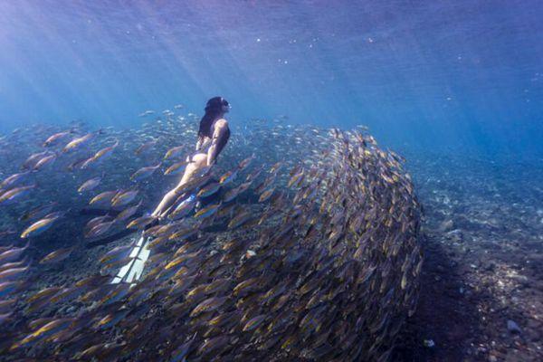 澳洲女子水下与鱼群唯美同游 获封真人美人鱼