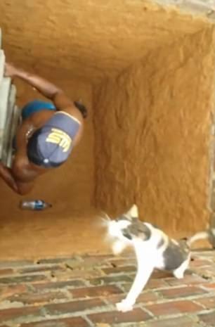 """""""功夫猫""""飞檐走壁跑出深洞 男子搭梯欲救被惊呆"""