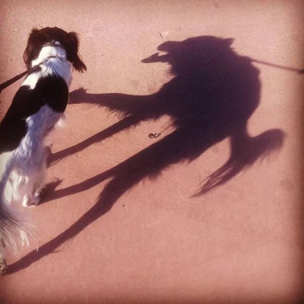 影子是个很神奇的东西图片