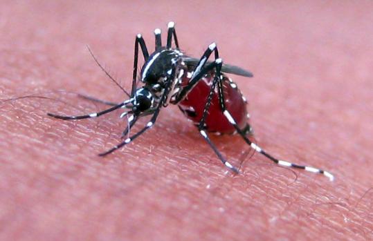 美寨卡人间蒸发:科学家分析病毒感染骤降原因