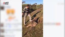 实拍:疑似华人澳洲虐杀袋鼠18刀 全程不时发笑