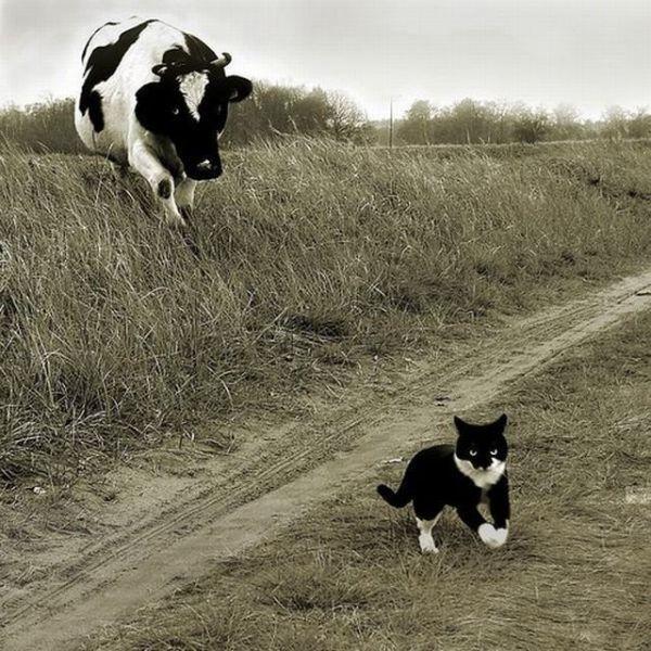 动物界的好基友们图片