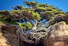 树木绝地逢生展生命之美