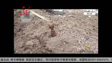 施工挖土 惊现一枚炮弹