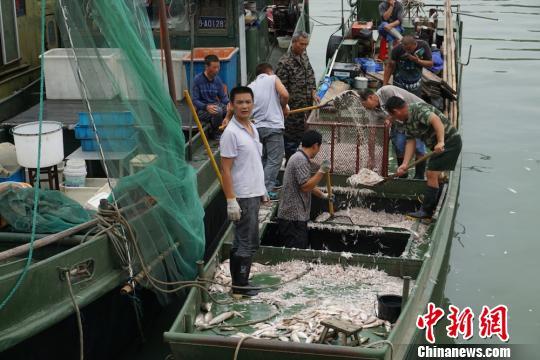 """太湖开捕 无锡渔民享收获""""湖鲜""""喜悦"""