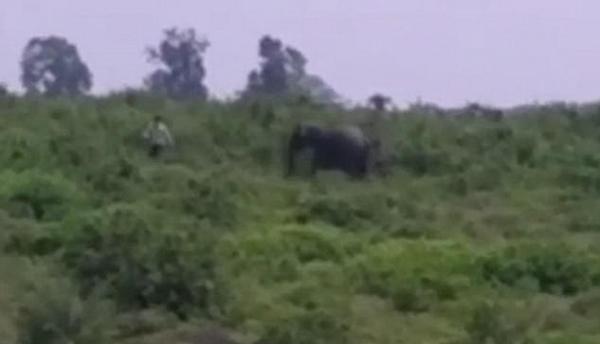 悲剧!印醉酒男子欲和大象自拍却惨遭踩踏致死