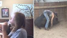 少年,有马不骑你非要骑猪