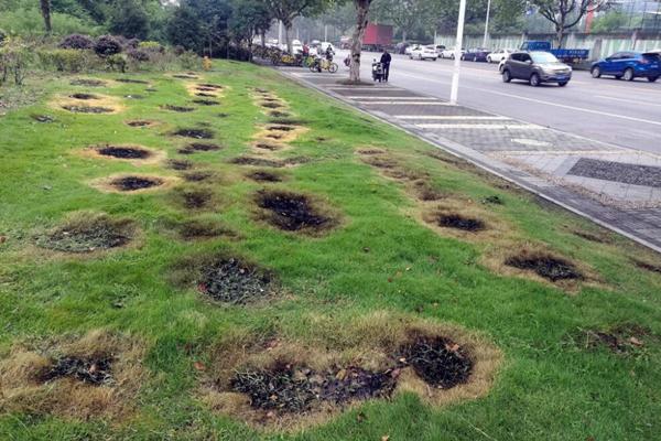 南京部分市民草坪烧纸钱祭祖烧坏草地