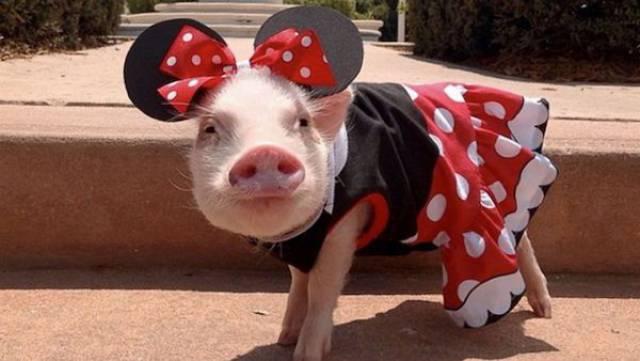 动物界的时尚宠儿们图片