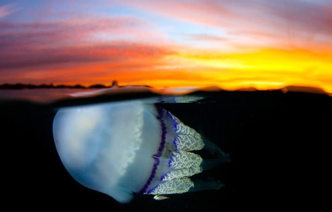 独特视角抓拍水母 海洋精灵浮游水下