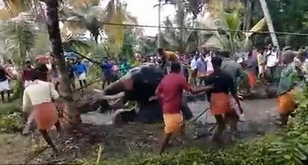 暖心!印200村民花17小时营救被困沼泽大象