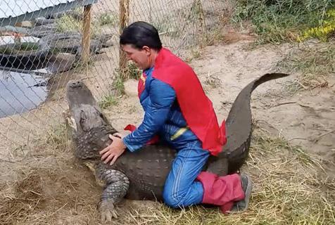 男子扮超人骑巨鳄 惊险画面令人胆颤