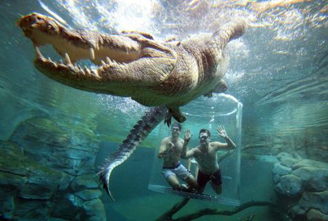 澳洲鳄鱼湾乐园:与凶猛巨鳄零距离接触
