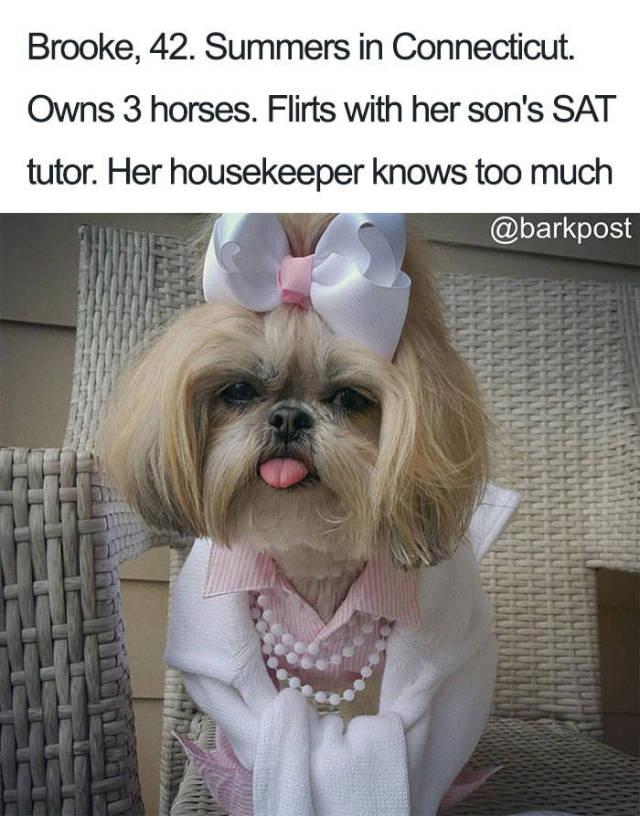 宠物界的名媛们图片