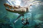 游客与巨鳄零距离接触