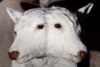 双头动物令人不可思议