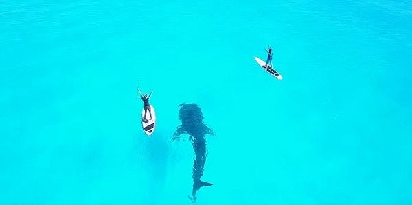 墨西哥清澈海域度假者与鲸鲨同游 画面唯美
