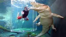 探秘世界最危险潜水地:游客与鳄鱼共泳