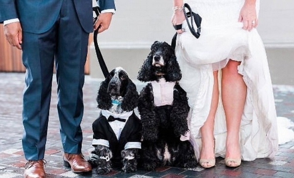 澳夫妇为让爱宠在其婚礼上风光亮相一掷千金