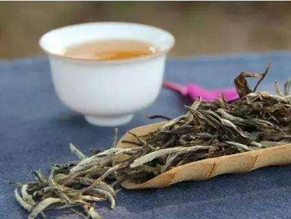 中国白茶首次入驻英园