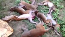 印度森林惊现12只离奇死亡猴子 惊呆巡山村民