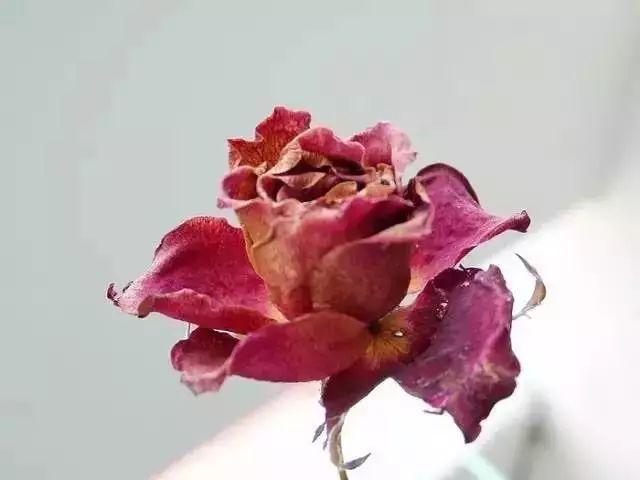 涂上气质急升!这10款干燥玫瑰色仙气逼人