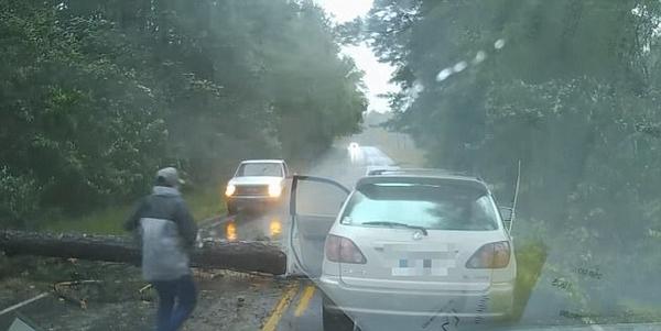 """美飓风""""艾尔玛""""肆虐致大树倒塌险砸中过往车辆"""