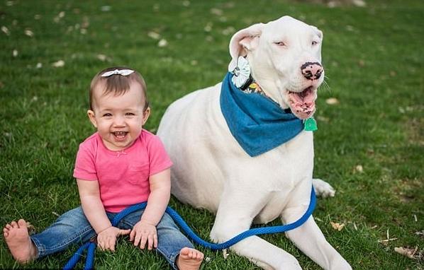 暖心!美女童和有视觉障碍且失聪狗狗成亲密好友