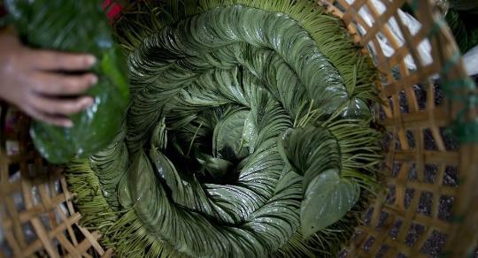 昂山素季发起反槟榔运动 槟榔搭烟草易致癌图片