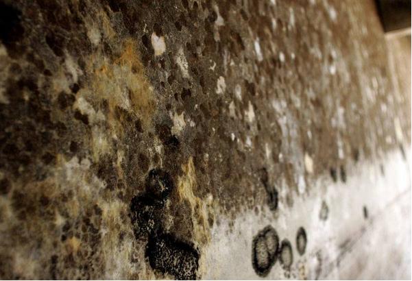 每天吸入100亿个霉菌孢子 为什么我们还活着?