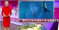 潜水员发现3米神秘巨兽 半透明会发光