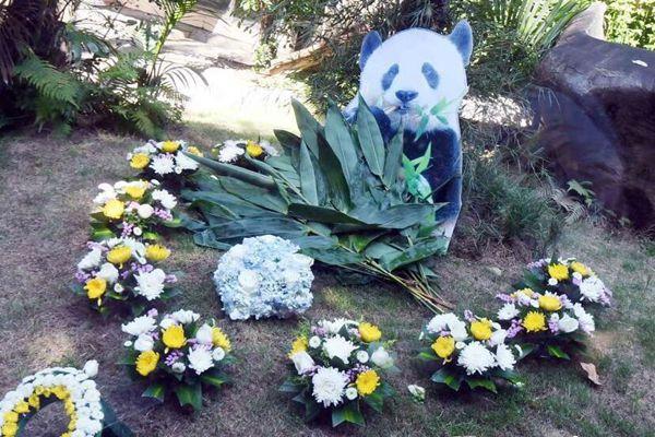 """""""盼盼""""原型大熊猫离世 千名海内外人士悼念"""
