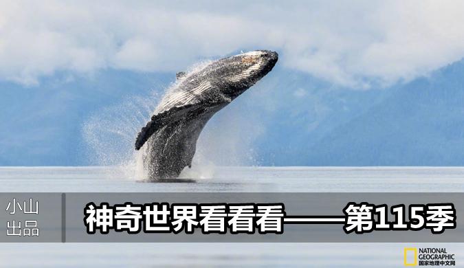 北京pk10刘军视频教程