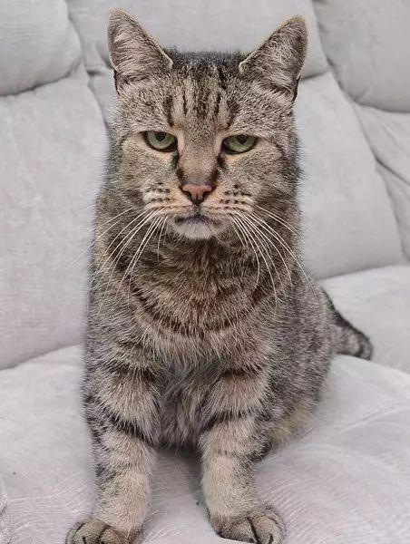 世界最长寿家猫去世终年32岁 相当于人类144岁