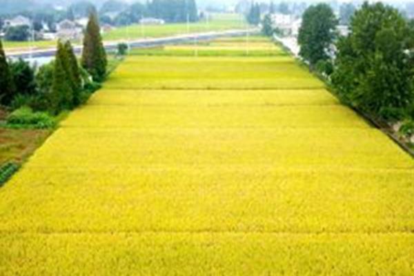 航拍:古城扬州金秋景如画