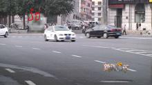黑龙江地区小虫乌泱泱 亲脸不伤身