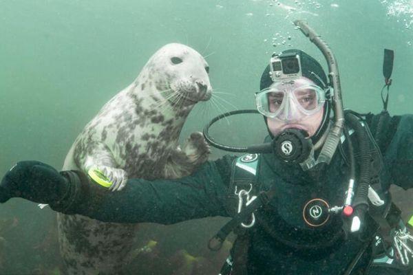 小海豹热情好客 与潜水员互动合影