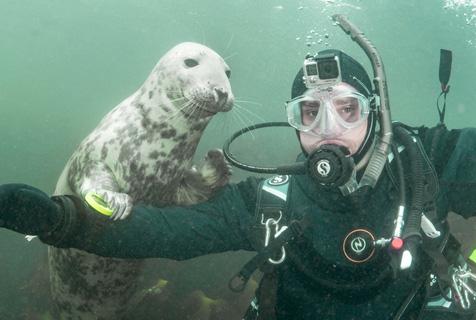 小海豹与潜水员互动合影 呆萌可爱