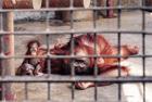 """记""""被囚""""动物真实处境"""