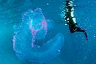 潜水员发现海洋独角兽