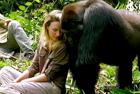 英夫妇探望老朋友大猩猩