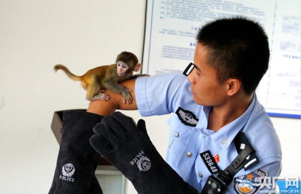 旅客西双版纳买小猕猴带回家当宠物 被民警查获