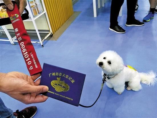 广州养犬登记一月增八千只