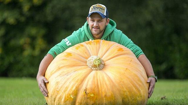 英国举办巨型蔬菜大赛 蔬菜界巨无霸重磅来袭